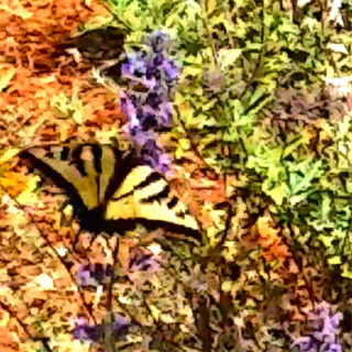 Fly Like a Butterfly + Soar with Jagmedia Online Learning