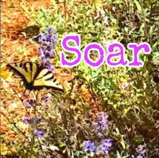Fly Like a Butterfly + Soar with Jagmedia Online Learning