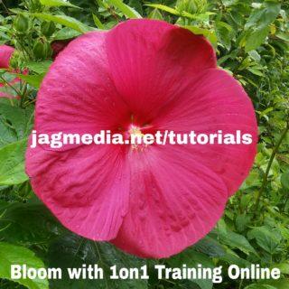 Bloom-Jagmedia-Online-Tutorials-)ne-on-One