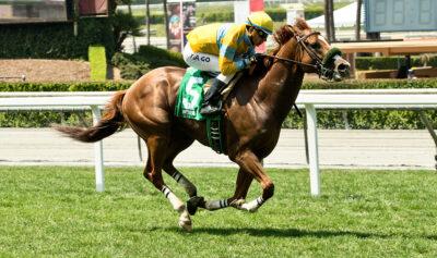 California Chrome thoroughbred racehorse